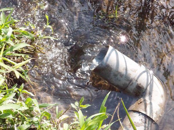 丹沢水系の清らかで豊富な水